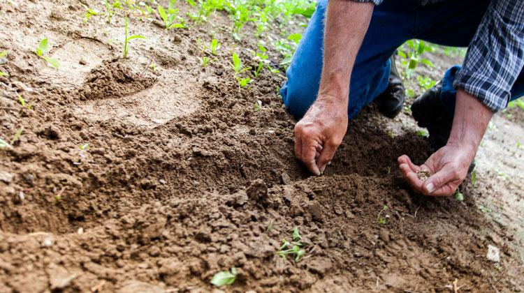 Survival Garden Planting Survival Seeds